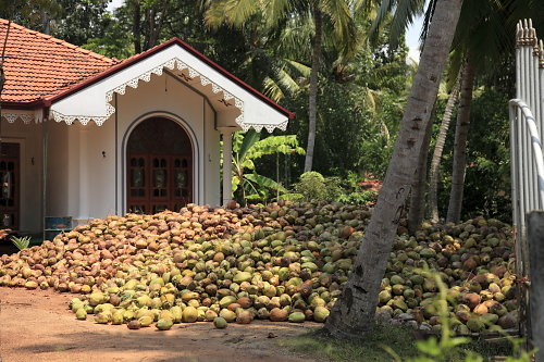 Sri-Lanka-02.JPG